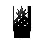 ananas alb negru